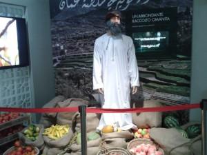 Raccolto Omanita